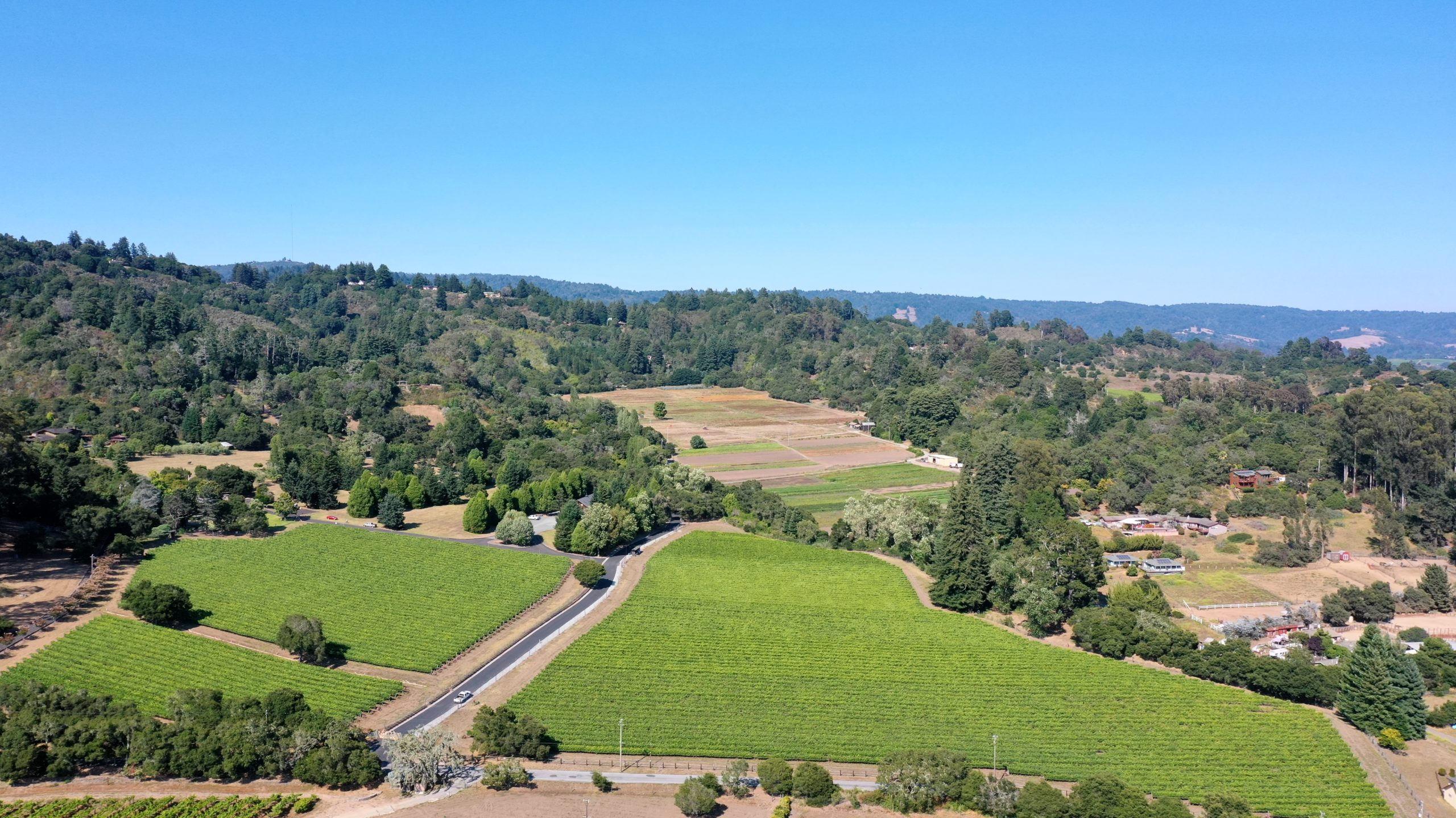 Lester Vineyard, top view