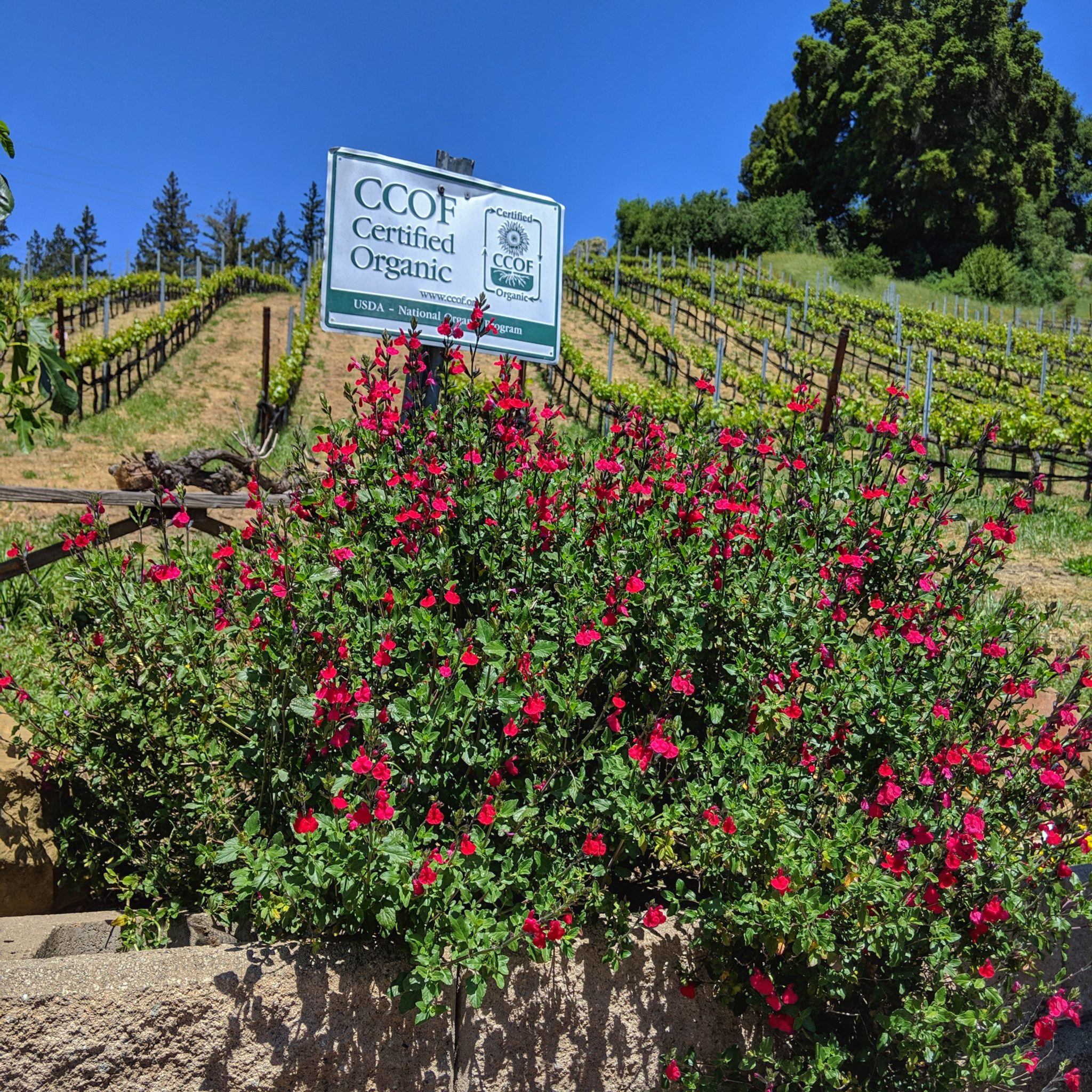 roses and certified organic sign
