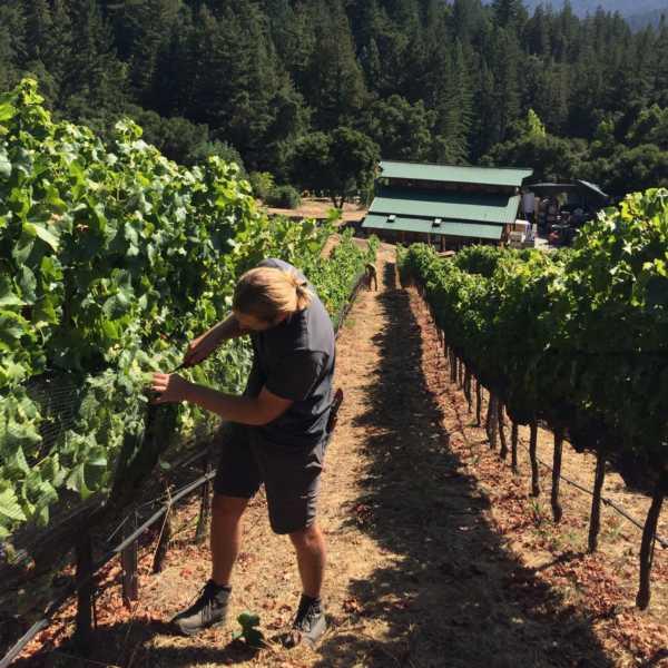 Blake in estate vineyard