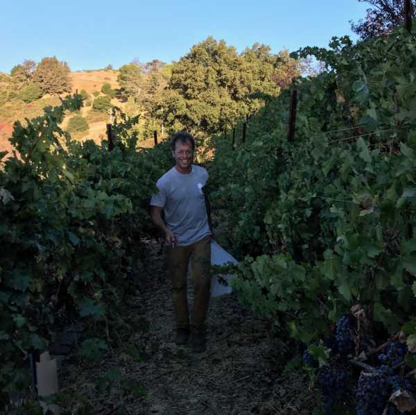 Bradley in vineyard