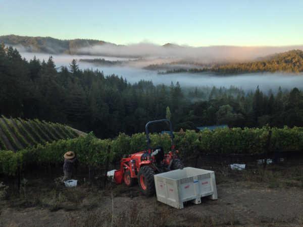 farming vineyard in fog