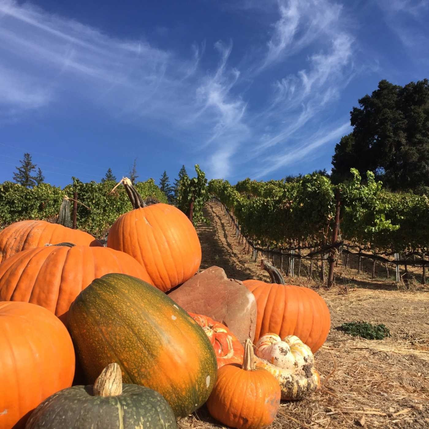 pumpkins on Rattlesnake Rock